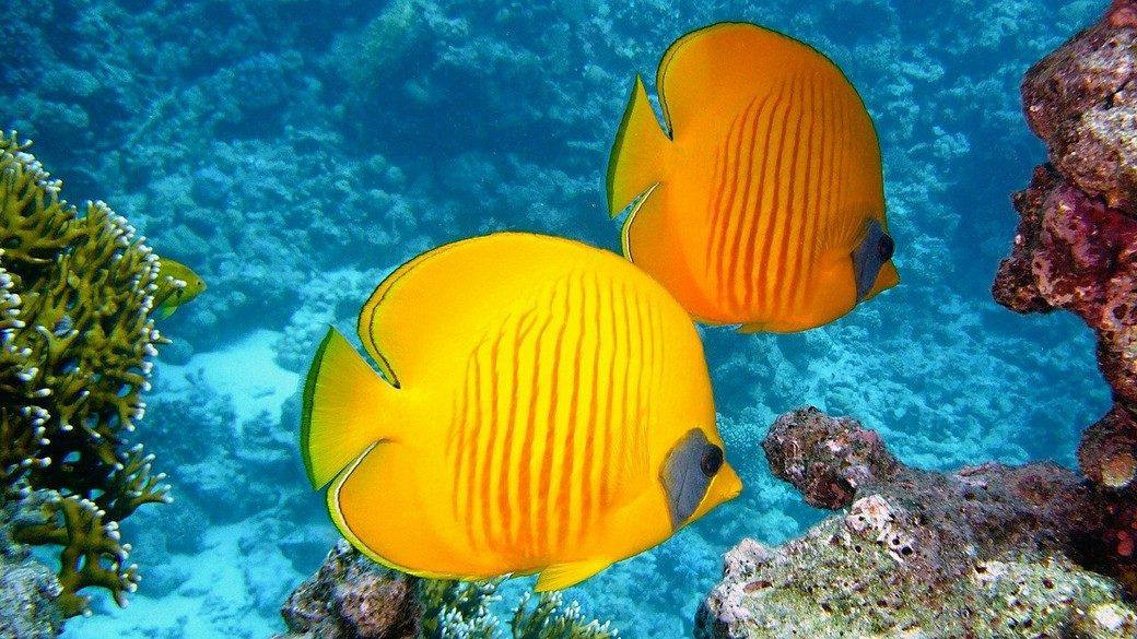 «un spot de plongée mondialement réputé»