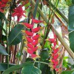 Les Petites Fleurs de Poirier Témoignages
